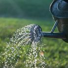 A watering can gently sprays water over a green field