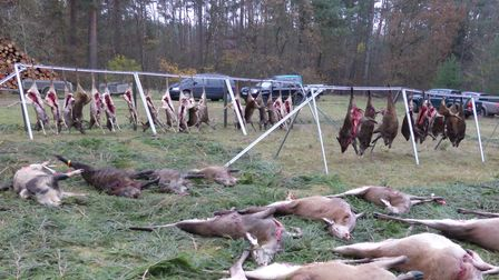 A post-hunt ceremony with shot animals laid out on spruce bows in Germany