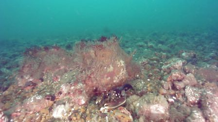 A lobster spottedon theCromer Shoal chalk beds, which arelocated off the north Norfolk coast