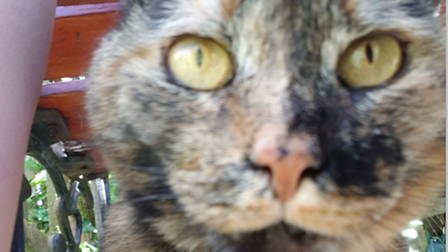 Close-up of a brown and tan tabby cat staring into the camera lens from a short distance away