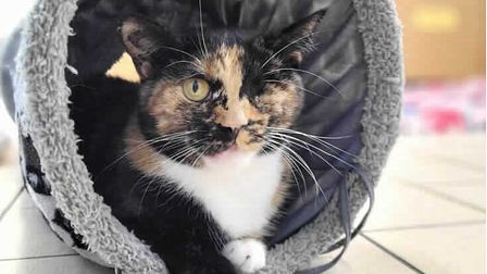 Trudie the 'miracle' cat has recovered from her injuries and is now looking for a loving new home.