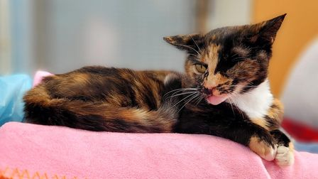 Trudie the 'miracle' cat is now looking for a loving new home.
