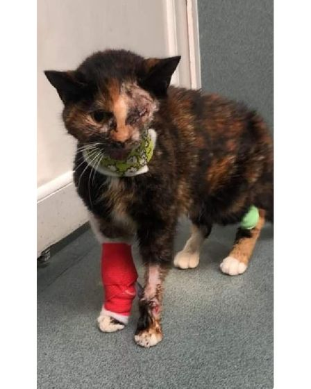 Trudie the 'miracle' cat suffered appalling injuries after being hit by a bus in March 2021.