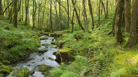 An image of a beautiful stream in the forest on Dartmoor National Park, Devon, England, UK. A slow s