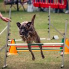 Della competing in the Dog Olympix 2019