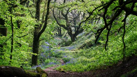Take a pretty woodland walk in Devon with these strolls which combine outdoor-based therapy workshops with art