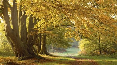 There are several great walks in and around Ashridge Estate, Hertfordshire.
