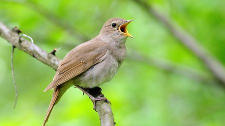 Alfred, Lord Tennyson wrote: 'The music of the moon sleeps in the plain eggs of the nightingale'