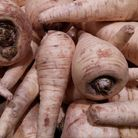 parsnips need a sharp frost to increase their sugar content and taste sweeter