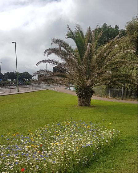 A small patch prepared by just one local resident at King's Gardens on Torquay seafront