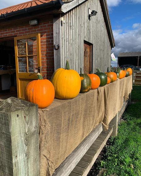 pumpkins lined up on a wall