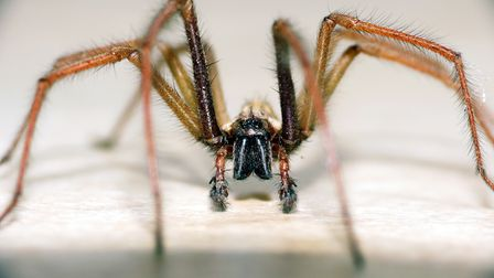 September and October are peak season for house spiders in the UK.