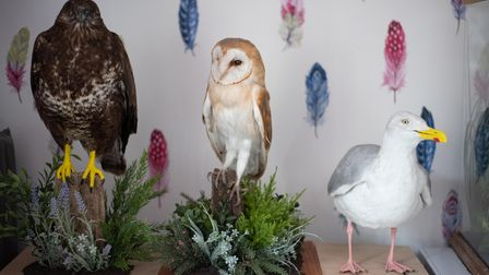 Animal taxidermy by Hannah Debman. Picture: Sarah Lucy Brown