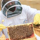 Andre of Cardona and Son Spirit Co ,Hitchin, with one of his bee covered honey frames
