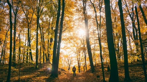 A person stands in the distance surrounded by trees adorned with golden and orange leaves