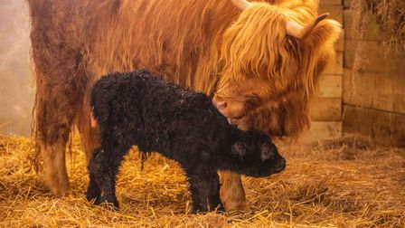 Bonnie at one day old with mum Agnes.