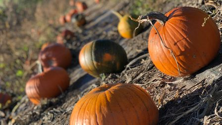 You can pick your own pumpkin from Church Farm Ardeley's patch this Halloween and then carve it in the carving tents.