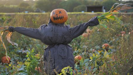 There's plenty ofHalloween hijinks atChurch Farm Ardeley including aPumpkin Hunt and Scarecrow Trail.
