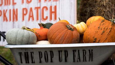 Pick your own pumpkin atThe Pop-Up Farm, which is near Flamstead, StAlbans, Harpenden, and Luton.