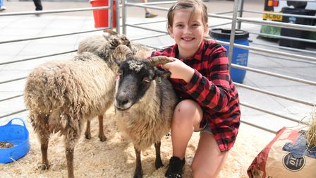 Maisie a young farmers with Greta the sheep. Feastival at the Forum in Norwich PICTURE: CHARLOTTE B