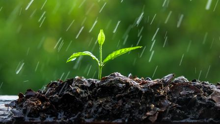 Undated Handout Photo of a seedling in the rain. See PA Feature GARDENING Wet. Picture credit should