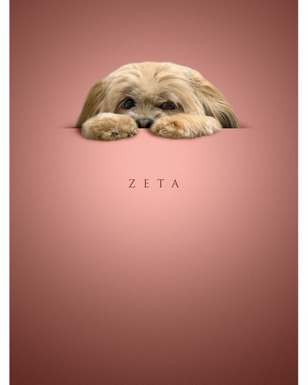 small brown puppy peeking over a line, with paws in front of its face, on a dusky pink background