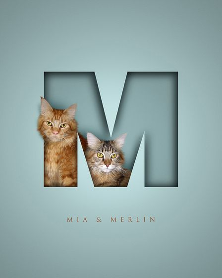 Two long hair cats in a letter M, in a dark aqua