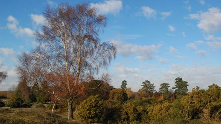 Beautiful autumn colours in Lyndhurst, The New Forest, Hampshire