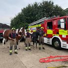 Firefighters from Royston Fire Station underwent large animal rescue training at the weekend