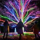 Neon tree by Culture Creative,My Christmas Trails