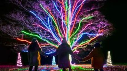 Neon tree by Culture Creative