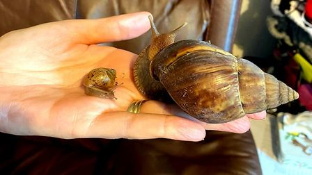 Gary and Shelbie the African land snails.