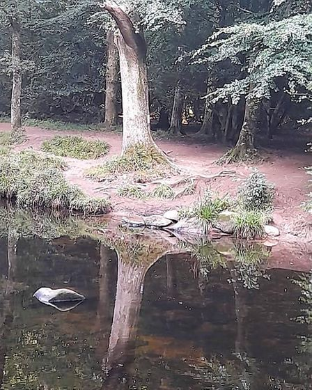 River Teign reflections