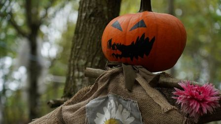 Aldenham Country Park will have a spooky trail thisHalloween