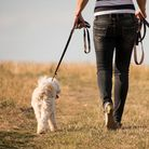 Walking the dog during a pandemic is not always easy