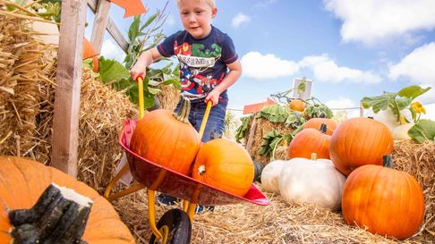 The zoo will host Pumpkin Fest during October.