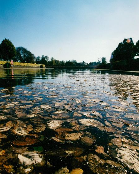 Leaves floating in the lily pond at Eaton Park, Norwich in 1999