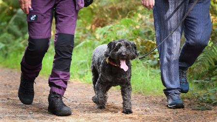 The Woof in the Woods dog walk at Thetford Forestraised money forBlue Cross