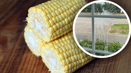 People living in the Manor Park estate in Sprowston had corn on the cobs lobbed at their houses