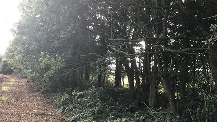 Police were called when more branches were cut down on September 17 on Mill Lane in Horsford