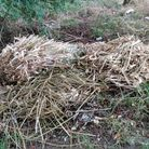Green waste dumped in Carbooke say Breckland Council