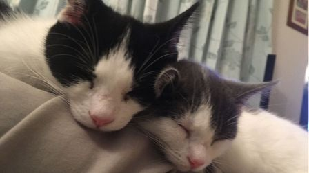 Rocky and his sister Pebblesat home in Ramsey.