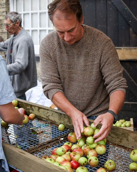 A man hard at work, sorting apples for pressing at The Railway Arms pub in Saffron Walden