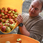 Two images: Left - Cockapoo Molly guards an apple; Right - Pouring apples into a press at The Railway Arms, Saffron Walden