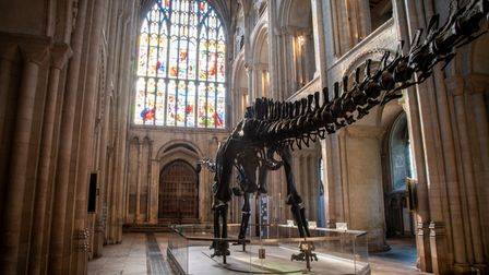 Dippy bathed in coloured afternoon light from the stained glass of the great west window at Norwich