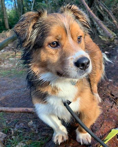Bobby is one of the charity's dogs currently looking for a forever home.