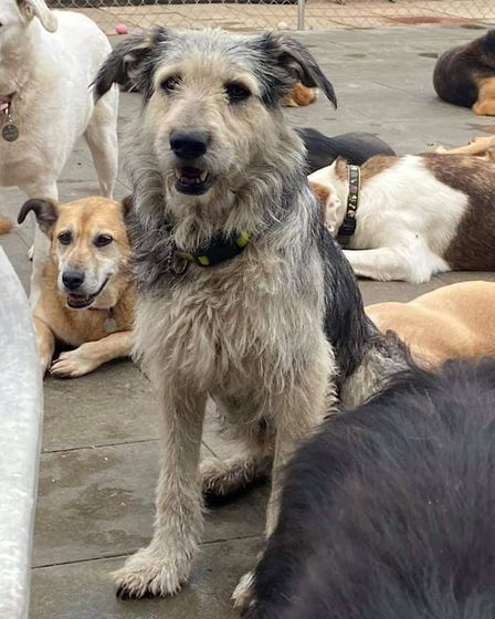 Mitzi will be in search of her forever home at the safe rescue for dogs coffee morning.
