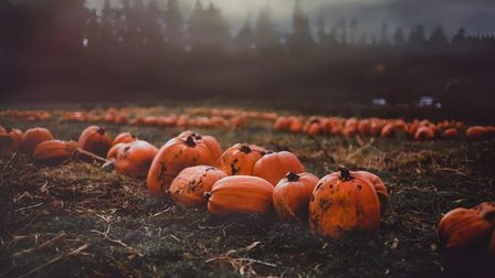 Nothing beats a trip to a pumpkin patch in October, these Kent farms have perfect pumpkins for carving