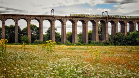 The Herts in Focus exhibition includesPriti Hathiramani's picture 'Meadow by the Viaduct' atDigswell Viaduct, WGC