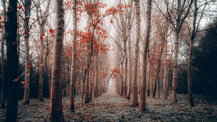 The Herts in Focus charity photography exhibition includesGeorge Salisbury's picture 'Autumn's corridor' inDatchworth.